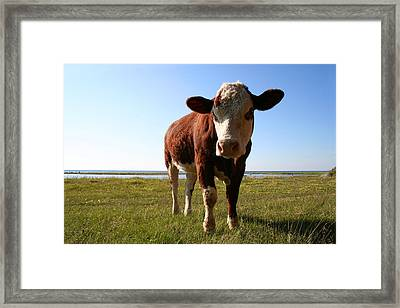 This Is My Grass Framed Print