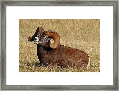 Framed Print featuring the photograph This Is My Space by Vivian Christopher