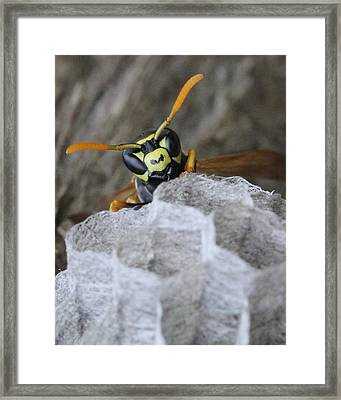 This Is My Spot.  Framed Print