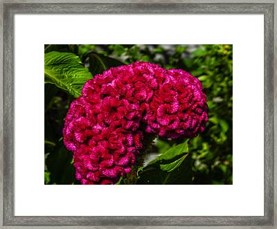 This Is Your Brain On Roundup Framed Print