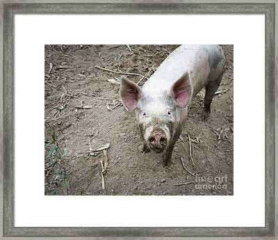 This Little Piggy Framed Print