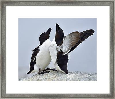 This Much Framed Print by Tony Beck