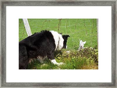 This Must Be Love. Framed Print by Michael Haslam