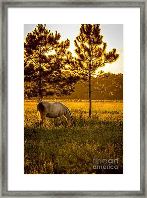 This Old Friend Framed Print by Marvin Spates