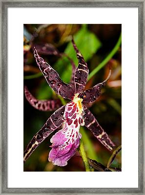 This Orchid Is A Star Framed Print by Beth Akerman