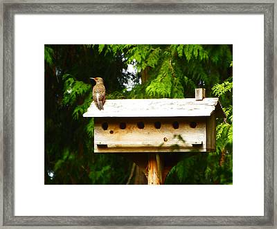 This Place Is Too Crowded Framed Print by Kym Backland