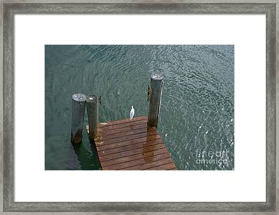 This Waiting Is For The Birds  Framed Print