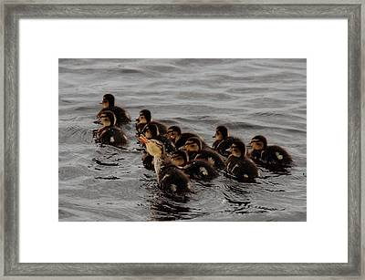 This Way Guys Framed Print