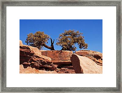 This Way Or That Framed Print by Bob and Nancy Kendrick
