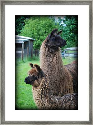This Way Or That Framed Print by Kathy Sampson