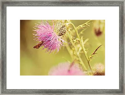 Thistle And Friend Framed Print by Lois Bryan