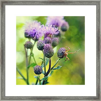 Thistle And Spinner Framed Print by Gynt