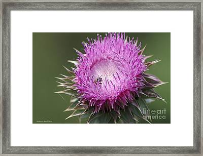 Thistle And The Bee Framed Print by Tannis  Baldwin