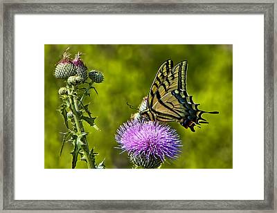 Framed Print featuring the photograph Thistle Do Just Fine by Gary Holmes