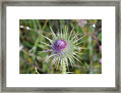 Framed Print featuring the photograph Thistle Flower by George Atsametakis