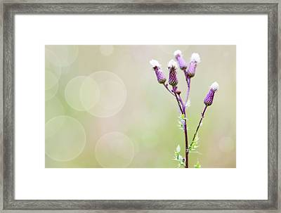 Thistle Flowers Framed Print by Wladimir Bulgar