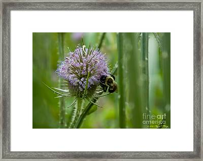 Thistle Forest Framed Print by Mary  King
