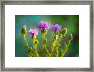 Thistle In The Sun Framed Print