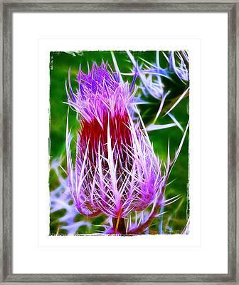 Thistle Framed Print by Judi Bagwell