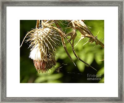 Thistle Framed Print by Laura Yamada