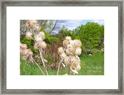 Thistle Me This Framed Print