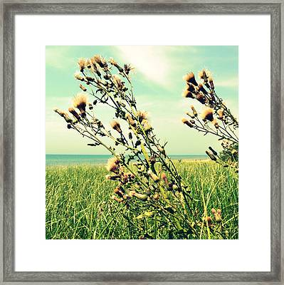 Thistle On The Beach  Framed Print by Michelle Calkins