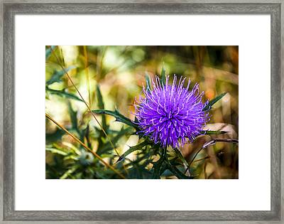 Framed Print featuring the photograph Thistle by Phil Abrams