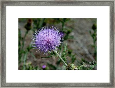 Framed Print featuring the photograph Thistle by Rod Wiens