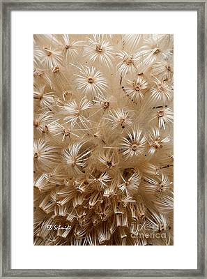 Thistle Seed Head Framed Print