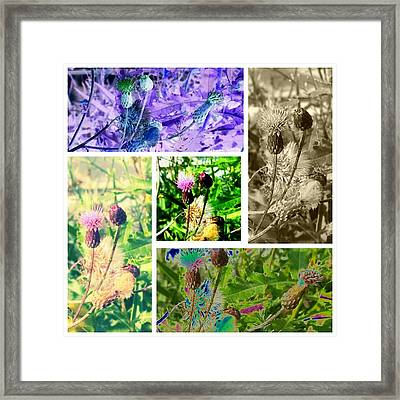Framed Print featuring the photograph Thistle Study by Thomasina Durkay
