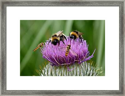 Framed Print featuring the photograph Thistle Wars by Scott Lyons