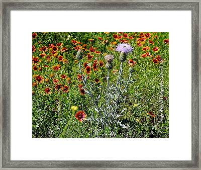 Thistle Bee Wildflowers Framed Print by ARTography by Pamela Smale Williams