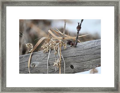 Framed Print featuring the photograph Thistles And Barbed Wire by Ann E Robson