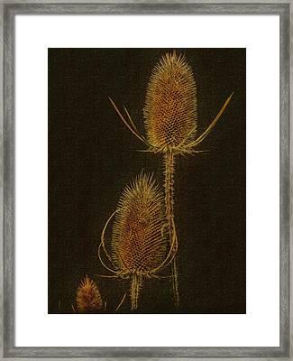Thistles Framed Print by Hanny Heim