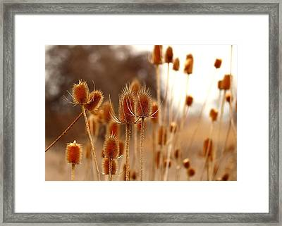 Framed Print featuring the photograph Thistles by Lynn Hopwood