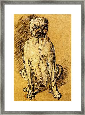 Thomas Gainsborough Bulldog Study Framed Print