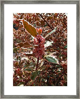 Framed Print featuring the photograph Thorn Berry by Laurie Tsemak