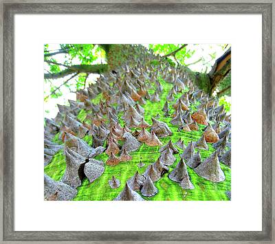 Thorn Tree Two Framed Print by John King