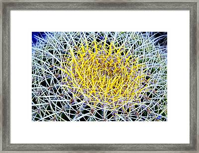 Thorny Cactus Framed Print