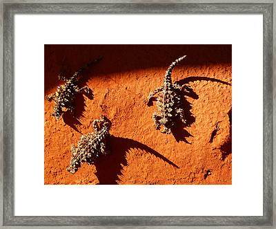 Framed Print featuring the photograph Thorny Devils by Evelyn Tambour