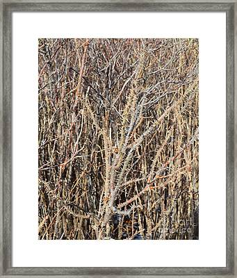 Thorny Wall Framed Print