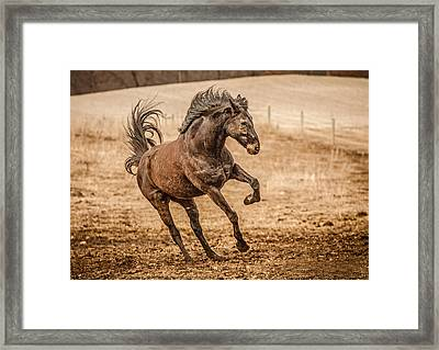 Thoroughbred Jack Hdr Framed Print by Toni Thomas
