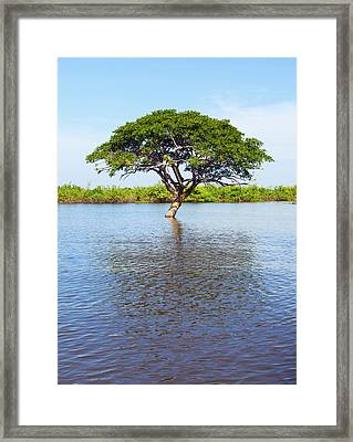 Thoroughly Watered Framed Print