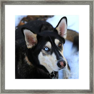 Those Eyes Framed Print by Carol Groenen