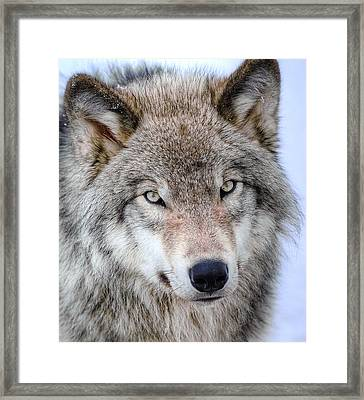 Those Eyes Framed Print by Joshua McCullough