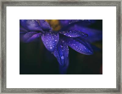Those Tears You Cry Framed Print by Laurie Search
