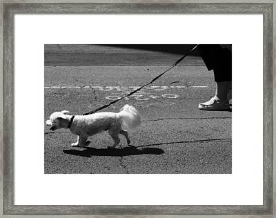 Those Who Will Framed Print by Jerry Cordeiro
