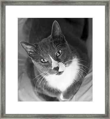 Devotion - Cat Eyes Framed Print