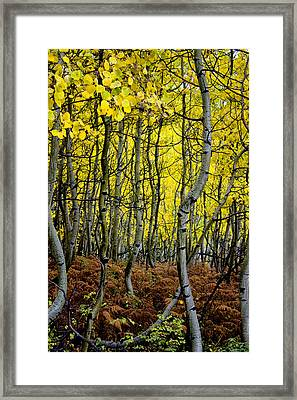 Framed Print featuring the photograph Through The Aspen Forest by Ellen Heaverlo