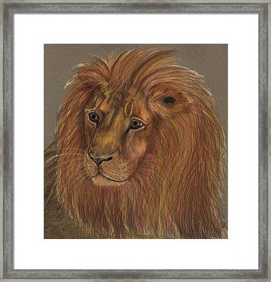 Framed Print featuring the drawing Thoughtful Lion 2 by Stephanie Grant